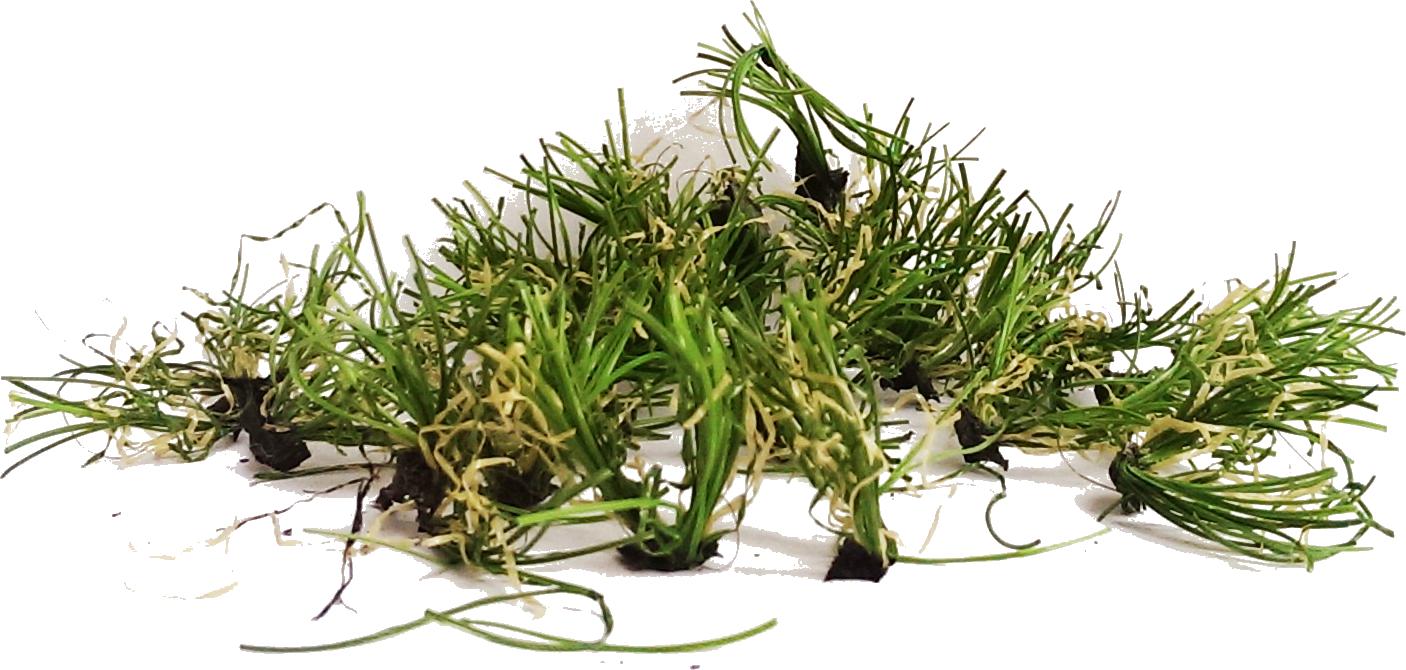 an artificial grass pile